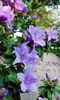 http://danskekirkegaarde.dk/uploads/images/img-flower4.jpg